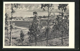 AK Kibbutz Kinereth, Panoramalandschaft - Palästina