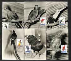 BELGIQUE - BELGIE - 6 Cartes MAXIMUM 1962 - ZOO - Touracou - Lori - Toucan - Paradisier - Paon Congolais - Coq De Roche - Cartoline Maximum