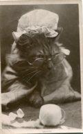 "CATS - ""Granny"" Cat With Glasses And Hat Etc 1911 Swaffham UK Postmark RPPC - Katten"