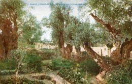 PALESTINE - Israel - JERUSALEM Garden Of Gethsemane - Celesque Series - Palestine