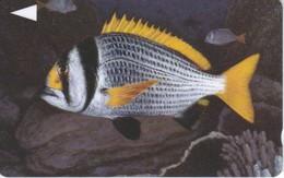 TARJETA DE BAHRAIN DE UN PEZ (SEA UNDERWATER-FISH-PEZ) - Baharain