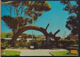 °°° 13381 - AUSTRALIA - OLD GUM TREE , GLENELG - 1972 With Stamps °°° - Altri