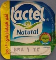 Egypt - Couvercle De Yoghurt Lactel (foil) (Egypte) (Egitto) (Ägypten) (Egipto) (Egypten) Africa - Coperchietti Di Panna Per Caffè