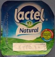 Egypt - Couvercle De Yoghurt Lactel (foil) (Egypte) (Egitto) (Ägypten) (Egipto) (Egypten) Africa - Opercules De Lait