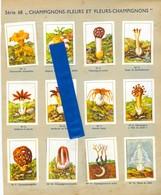 19/8 Nestle Serie 68 Champignons Fleurs Mushrooms - Nestlé