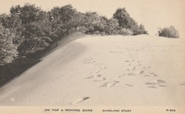 On Top A Moving Dune  -  Duneland Study - Other