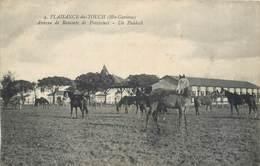 CPA 31 Haute Garonne Plaisance Du Touch Annexe De Remonte Du Frayssinet Un Paddock Militaria - France