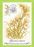 Bophuthatswana - Maximum Card Of 1984 - MiNr. 117 - Grasses - Hyparrhenia Dregeana - Bophuthatswana