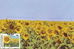 Bophuthatswana - Maximum Card Of 1988 - MiNr. 206 - Agricultural Crops - Sunflower - Bophuthatswana