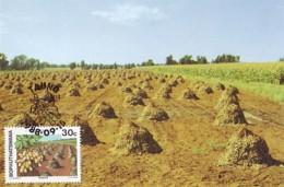 Bophuthatswana - Maximum Card Of 1988 - MiNr. 207 - Agricultural Crops - Peanuts - Bophuthatswana