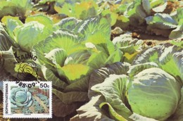 Bophuthatswana - Maximum Card Of 1988 - MiNr. 209 - Agricultural Crops - Cabbages - Bophuthatswana