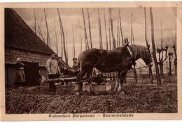 BRABANTSCH ATTELAGE TRES  ANIMEE - Pays-Bas