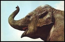 ZOO. ASIAN ELEPHANT - Elephas Maximus. USSR, 1986. Unused Postcard - Elephants