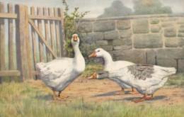 AP59 Animals - Geese - Artist Drawn - Birds
