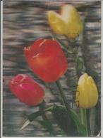 Bouquet De Tulipes Jaunes Et Rouges. - Cartes Stéréoscopiques