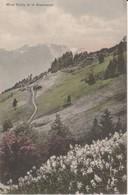 (CH1166) MONT CUBLY ET LE GRAMMONT ... UNUSED - VD Vaud