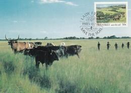 Transkei - Maximum Card Of 1985 - MiNr. 166 - Soil Conservation - Pasture - Transkei