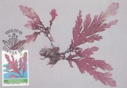 Transkei - Maximum Card Of 1988 - MiNr. 214 - Sea Algae - Plocamium Corallorhiza - Transkei