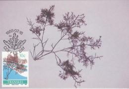Transkei - Maximum Card Of 1988 - MiNr. 215 - Sea Algae - Gelidium Amanzii - Transkei