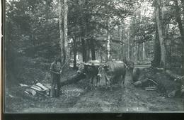 Saint Sauvant 86600 Débardage En Forêt Avec Des Boeufs Cliche Couvrat 323CP02 - Lieux