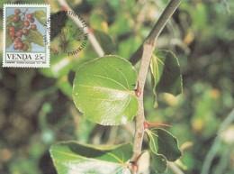 Venda - Maximum Card Of 1985 - MiNr. 113 - Fruits - Ziziphus Mucronata - Venda