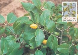 Venda - Maximum Card Of 1985 - MiNr. 115 - Fruits - Berchemia Discolor - Venda