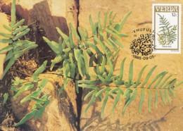 Venda - Maximum Card Of 1985 - MiNr. 116 - Fern Plants - Pellaea Dura - Venda