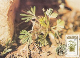Venda - Maximum Card Of 1985 - MiNr. 117 - Fern Plants - Actiniopteris Radiata - Venda