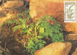 Venda - Maximum Card Of 1985 - MiNr. 118 - Fern Plants - Adiantum Hispidulum - Venda