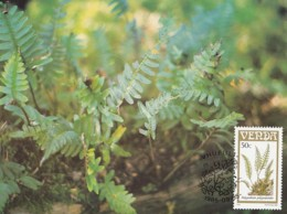 Venda - Maximum Card Of 1985 - MiNr. 119 - Fern Plants - Polypodium Polypodioides - Venda