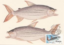 Venda - Maximum Card Of 1987 - MiNr. 159 - Freshwater Fish - Hydrocynus Vittatus - Venda