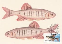 Venda - Maximum Card Of 1987 - MiNr. 160 - Freshwater Fish - Opsaridium Zambezense - Venda