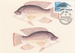 Venda - Maximum Card Of 1987 - MiNr. 161 - Freshwater Fish - Oreochromis Mossambicus - Venda
