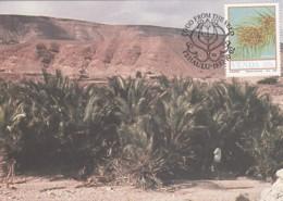Venda - Maximum Card Of 1987 - MiNr. 164 - Field Crops - Phoenix Reclinata - Venda