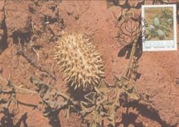 Venda - Maximum Card Of 1987 - MiNr. 166 - Field Crops - Cucumis Africanus - Venda