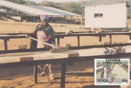 Venda - Maximum Card Of 1988 - MiNr. 169 - Coffee Industry - Venda