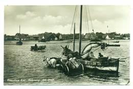 Rosja Russia Rybatschi - Rossitten Kurische Nehrung Ob Kaliningrad Königsberg Ca 1930 - Russia
