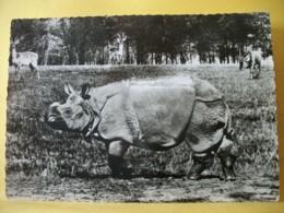 B21 3904 CPSM GM PUBLICITAIRE.1956 - RHINOCEROS - LABORATOIRES ROLAND MARIE DE PARIS XIeme. - Rinoceronte