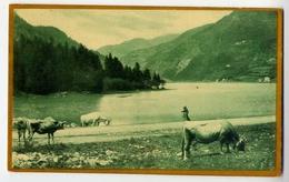 Mucche Al Pascolo - Panorama Lago E Montagne - Formato Piccolo Viaggiata – E 13 - Cows