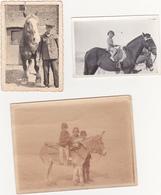 Lot De 7 Photographies Amateur / Cheval, Anne, Mulet (Horse, Pferd) (Provenance Belgique) - Années 30 - Foto