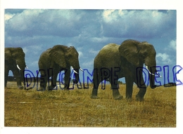 Eléphants. Africa Dell'est. Fauna Africana. Elefanti - Éléphants