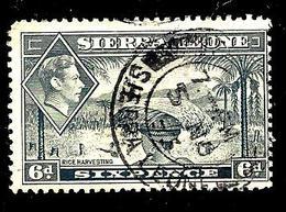 SIERRA LEONE 165° 6p Gris George VI Récolte Du Riz(10% De La Cote + 0,15) - Sierra Leone (...-1960)