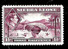SIERRA LEONE 160A° 1,50p Lilas George VI Récolte Du Riz(10% De La Cote + 0,15) - Sierra Leone (...-1960)