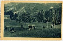 Mucche Al Pascolo - 477 - Formato Piccolo Non Viaggiata – E 13 - Cartoline