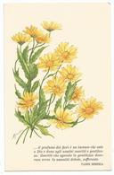 W4042 Fiori Flowers Fleurs - Illustrazione Illustration - Versi Di Padre Semeria / Non Viaggiata - Fiori