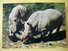 B21 3980 CPM - RESERVE AFRICAINE DE SIGEAN. 11130 SIGEAN. COUPLE RHINOCEROS. - Rinoceronte