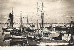 Port Louis Thonniers Et Pinasse Au Port - Port Louis
