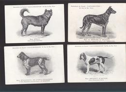 Races De Chiens / Lot De 11 CP / Briquet, épagneul, Dingo, Irish Terrier,braque, Dogue, Barbet, Griffon... - Chiens