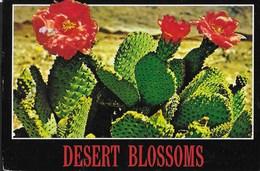 FIORI DEL DESERTO - U.S.A. - VIAGGIATA 1989 FRANCOBOLLO ASPORTATO - Fiori