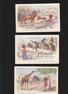 """Animaux / Roudoudou Visite Le Zoo / Racisme 1900 / Lot De 3 CP Samaritaine / """"singe Savoir Danser Comme Vrai Negre"""" - Animals"""